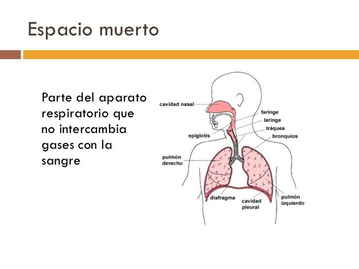 Espacio muerto <ul><li>Parte del aparato respiratorio que no intercambia gases con la sangre </li></ul>