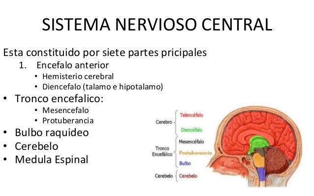 Fisiologia y anatomia del sistema nervioso.ppsx