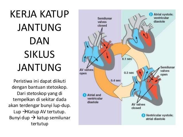Fisiologi sirkulasi