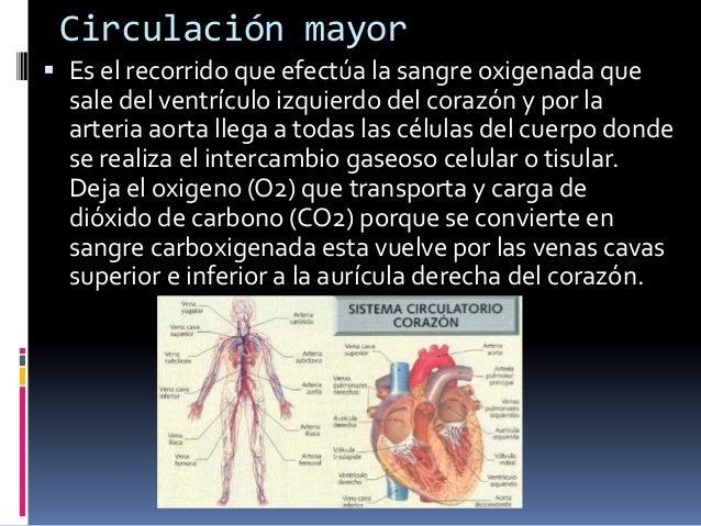 Circuito Que Realiza La Sangre : Fisionomía del corazón y circulacion