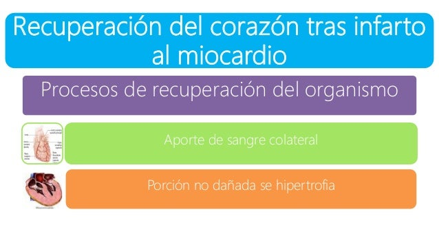 Recuperación del corazón tras infarto al miocardio Procesos de recuperación del organismo Aporte de sangre colateral Porci...