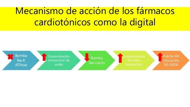 Mecanismo de acción de los fármacos cardiotónicos como la digital Bomba Na-K ATPasa Concentración intracelular de sodio Bo...
