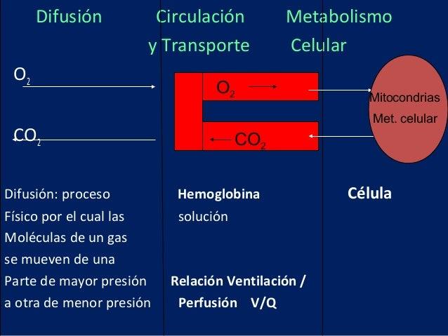Difusión Circulación Metabolismoy Transporte CelularO2CO2Difusión: proceso Hemoglobina CélulaFísico por el cual las soluci...