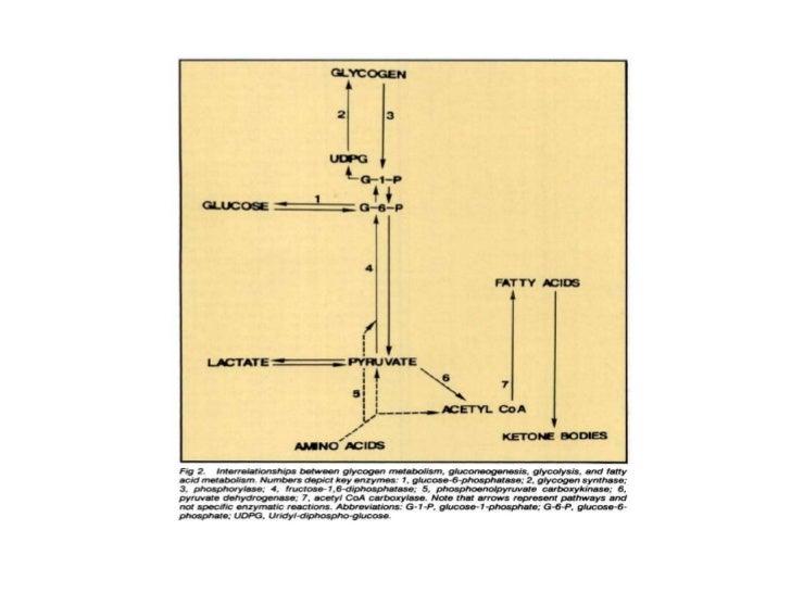 Fisiopatología de la hipoglicemia