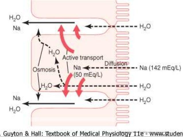 Diarrea Secretora Se produce por activación de mediadores intracelulares (AMPc, GMPc, Ca) Causas: Toxinas Bacterianas ...
