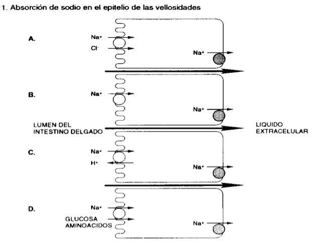  Activación de AMPc:  Toxinas bacterianas: V. cholerae , E. coli (TL), Shigella, Salmonella, Campylobacter, P. aeroginos...