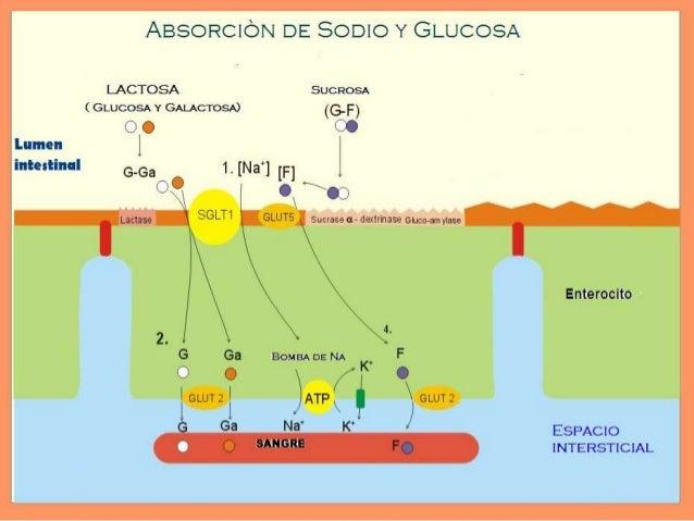•Diarrea inflamatoria  Daño del enterocito e inflamación asociada de grado variable.  Infecciosa es un buen ejemplo  Co...