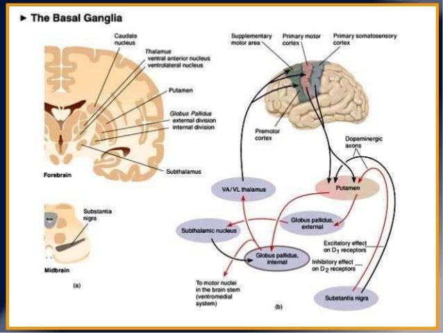 Fisiopatolog 237 A De Las Fluctuaciones Motoras En Enfermedad