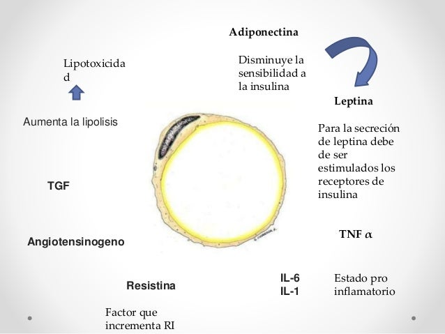 Fisiopatología obesidad