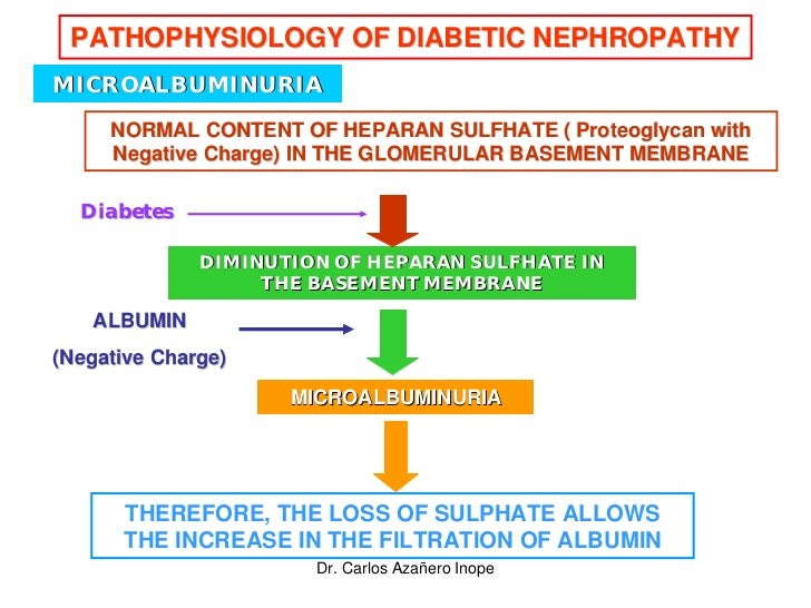 pathophysiology of diabetes nephropathy and atherosclerosis Endothelial dysfunction has been posited to play an important role in the pathogenesis of diabetic nephropathy (dn) in production of reactive oxygen species (ros) and proinflammatory mediators are implicated in pathogenesis of various disorders like hypertension, atherosclerosis and diabetic nephropathy [ 28-30.