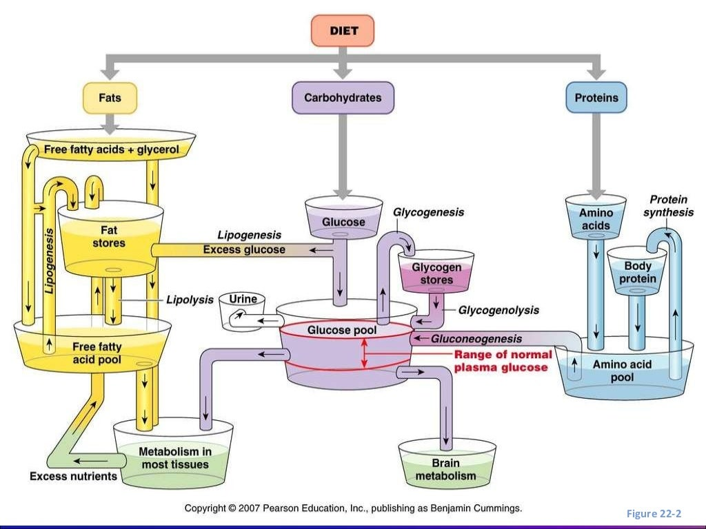 Fisiopatologia de la cetoacidosis diabetica