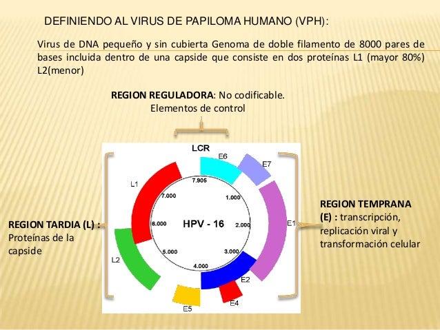 Fisiologia viral