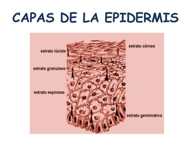 Fisiopatologia i sal la piel y sus enfermedades