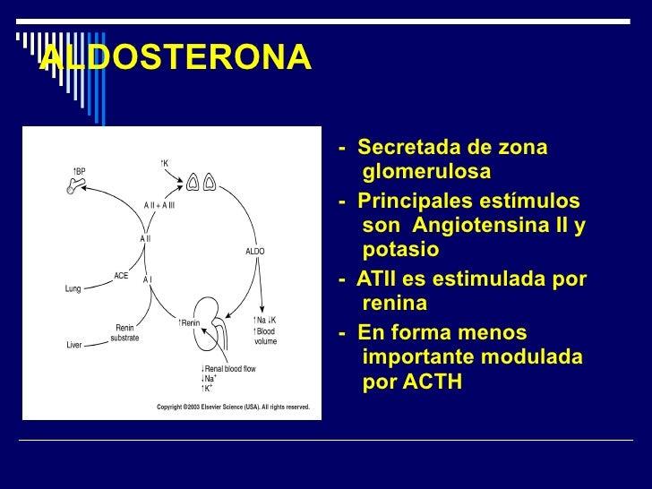 ALDOSTERONA <ul><li>-  Secretada de zona glomerulosa </li></ul><ul><li>-  Principales estímulos son  Angiotensina II y pot...