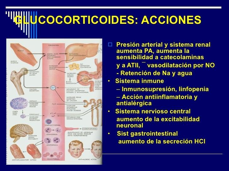GLUCOCORTICOIDES: ACCIONES <ul><li>Presión arterial y sistema renal aumenta PA, aumenta la sensibilidad a catecolaminas </...