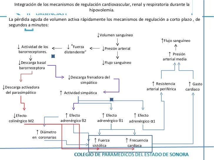 Integración de los mecanismos de regulación cardiovascular, renal y respiratoria durante la hipovolemia. ↓ Volumen sanguín...