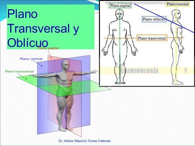 Planimetría Fisioterapia Anatomía Humana ODF
