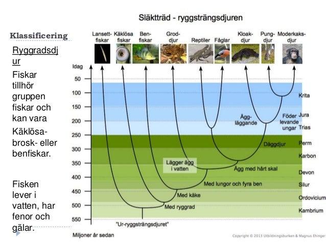 Fisk Slide 3