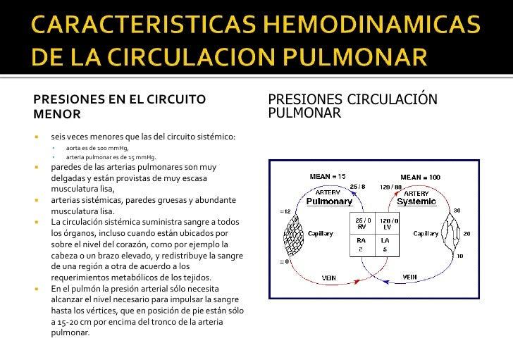 Circuito Pulmonar : Unidad circulacion pulmonar