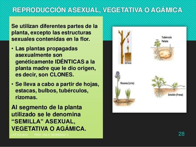 Reproduccion sexual y asexual de las plantas pdf