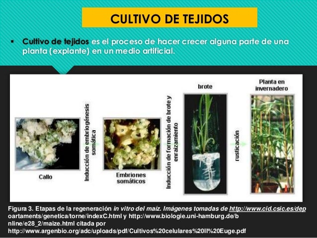 Formas de reproduccion asexual en las plantas pdf