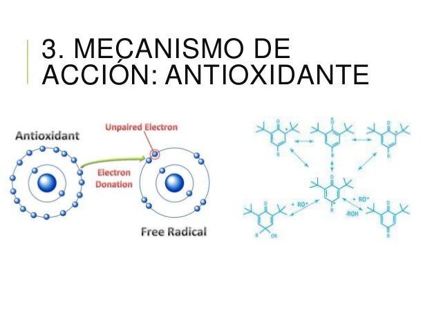 3. MECANISMO DE ACCIÓN: ANTIOXIDANTE