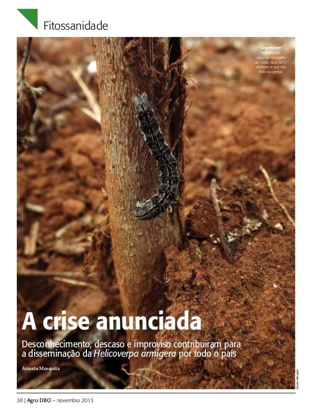 Fitossanidade Lagarta em soqueira de algodão na região de Costa Rica (MT): alimento é que não falta no campo.  A crise anu...