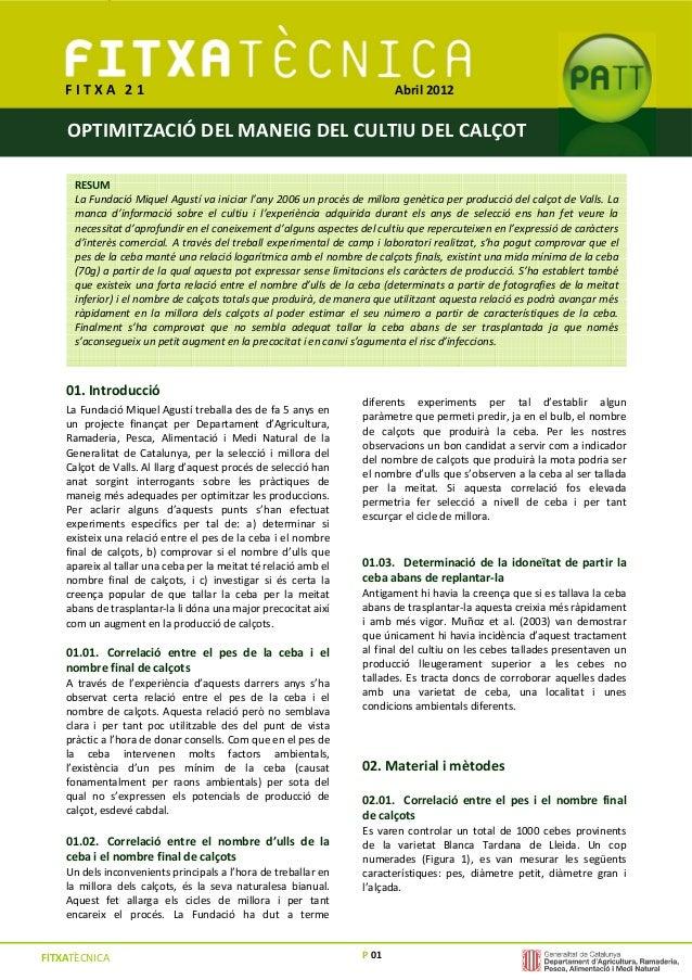 P 01 F I T X A 0 1 OPTIMITZACIÓ DEL MANEIG DEL CULTIU DEL CALÇOT FITXATÈCNICA 01. Introducció La Fundació Miquel Agustí tr...