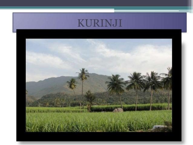 Five landscape of ancient tamilnadu(kurinji , mullai, marutham, neythal, palai) Slide 2