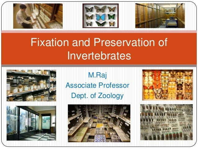 M.Raj Associate Professor Dept. of Zoology Fixation and Preservation of Invertebrates
