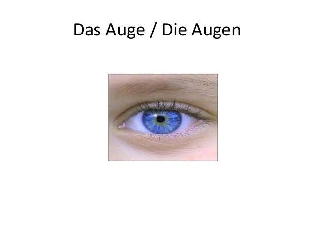 Das Auge / Die Augen