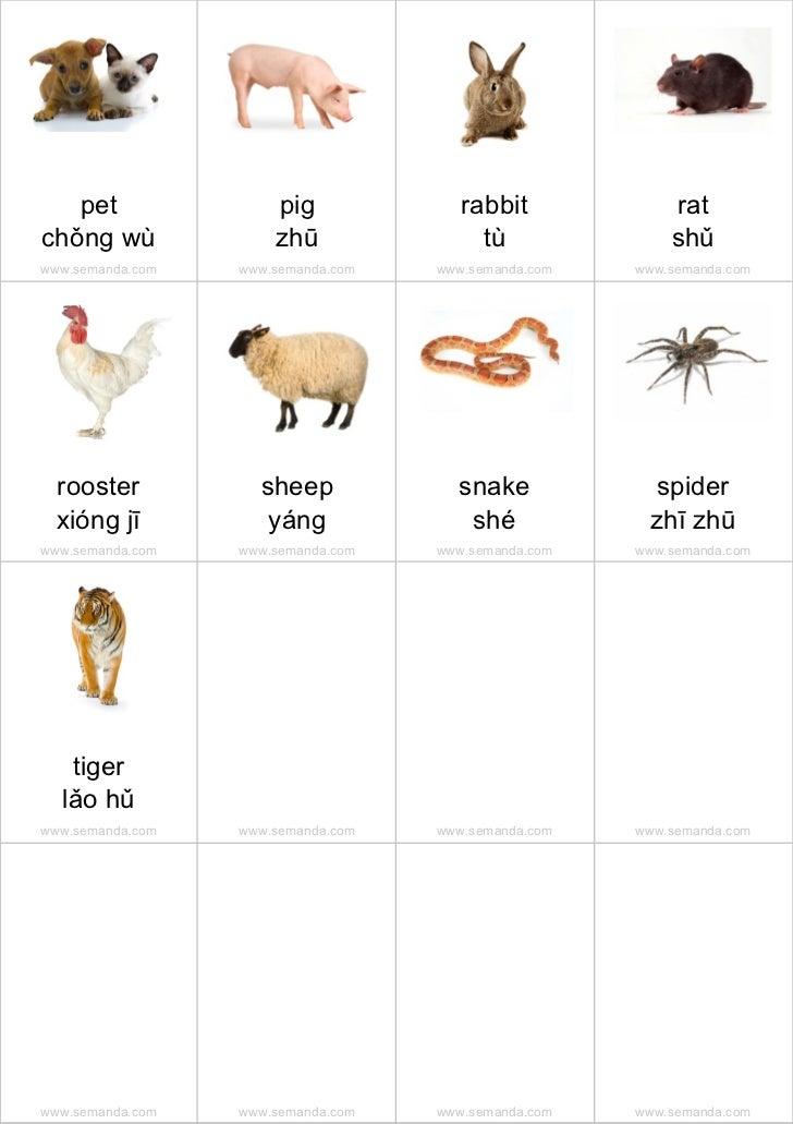 pet                pig              rabbit             ratchǒng wù              zhū                tù               shǔwww...