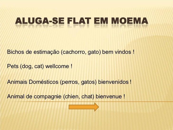 Bichos de estimação (cachorro, gato) bem vindos !  Pets (dog, cat) wellcome ! Animais Domésticos (perros, gatos) bienvenid...