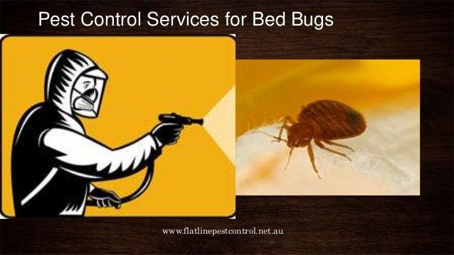 Pest Control Services Company In Central Coast Australia