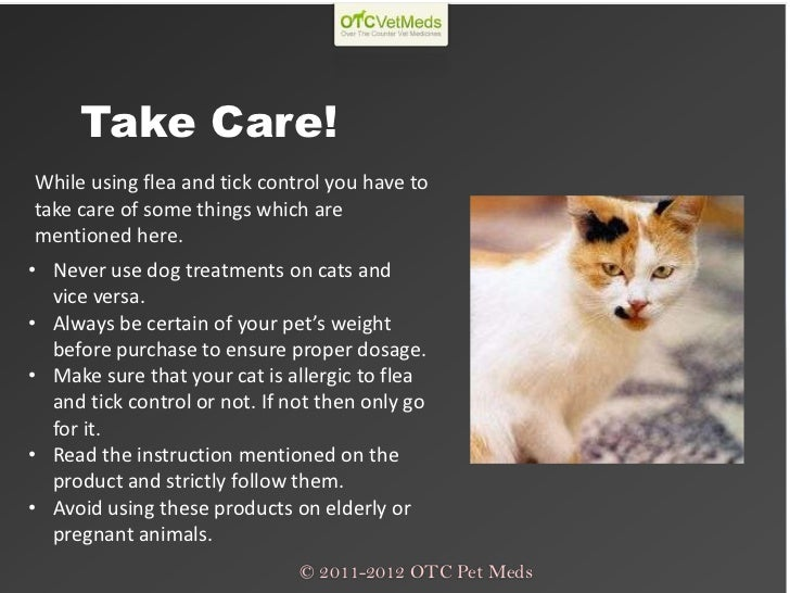 can a cats purr heal you