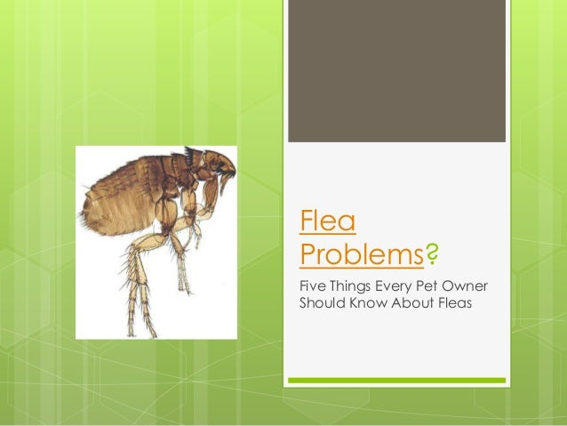 FleaProblems?Five Things Every Pet OwnerShould Know About Fleas