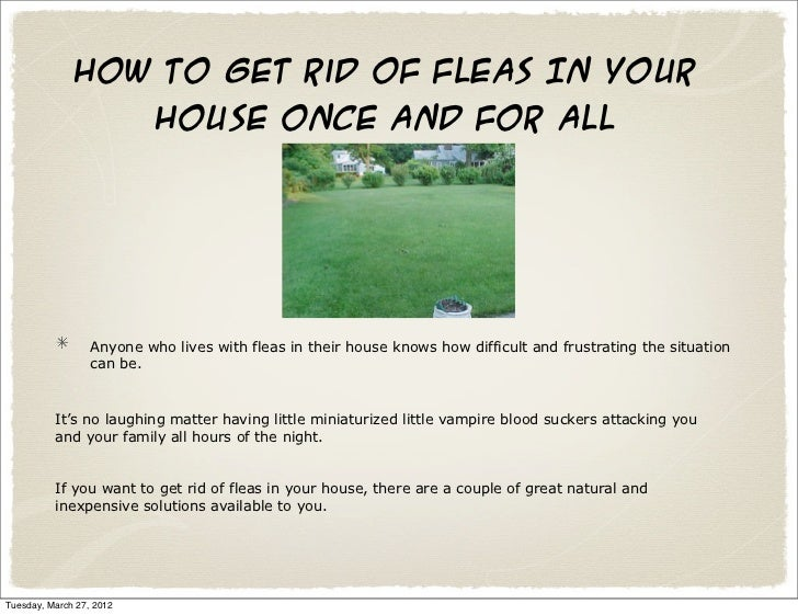 Get Rid Of Fleas In Home 6 Ways To