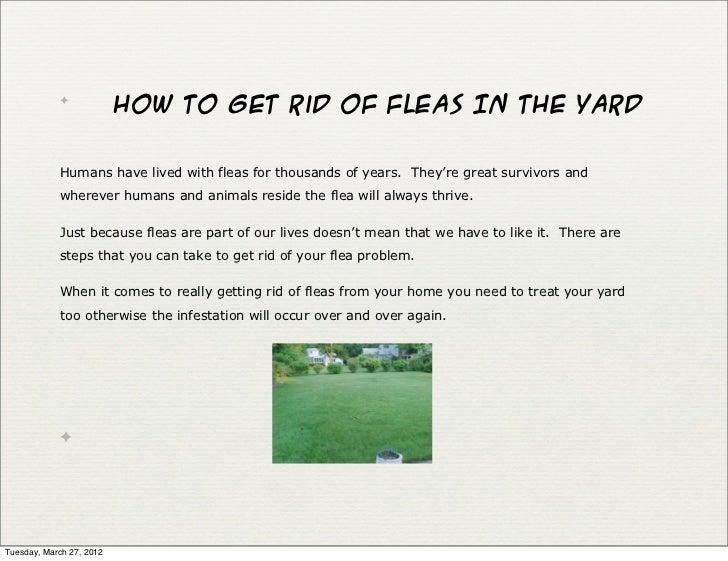 flea infestation yard. Flea Infestation Yard SlideShare