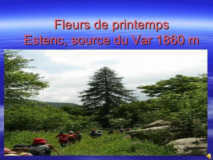 Fleurs de printemps Estenc, source du Var 1860 m