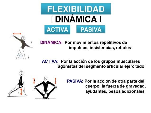 ejercicios de flexibilidad estatica activa