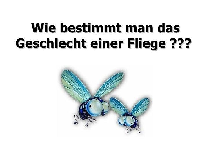 Wie bestimmt man das Geschlecht einer Fliege ???