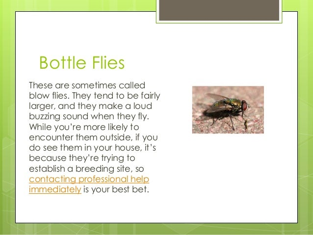 how to get rid of fruit flies in garbage disposal