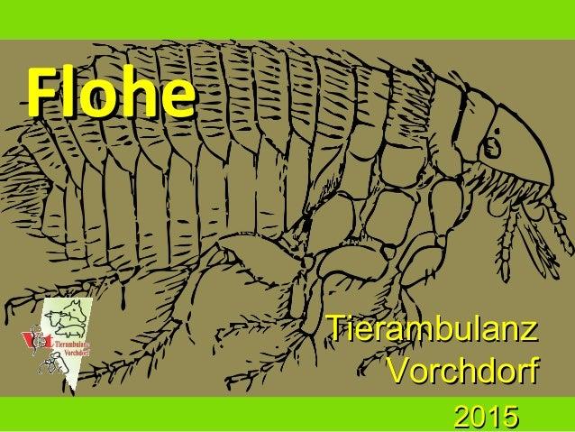 FloheFlohe TierambulanzTierambulanz VorchdorfVorchdorf 20152015