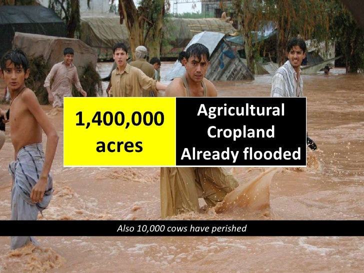 Also 10,000 cows have perished<br />