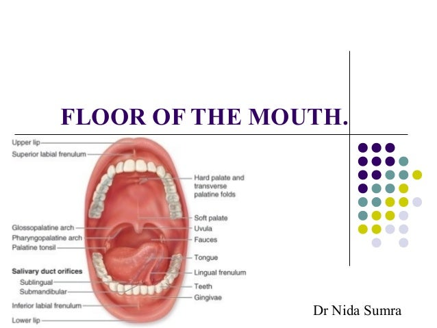 Floor of the mouth for Floor of mouth anatomy