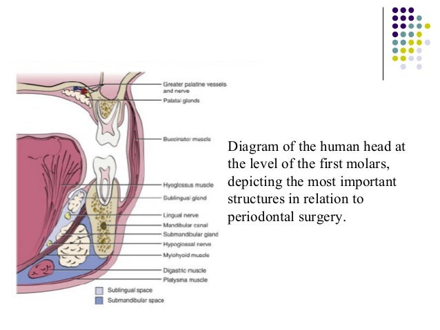 Floor of the mouth anatomy ppt thefloors co for Floor of mouth anatomy