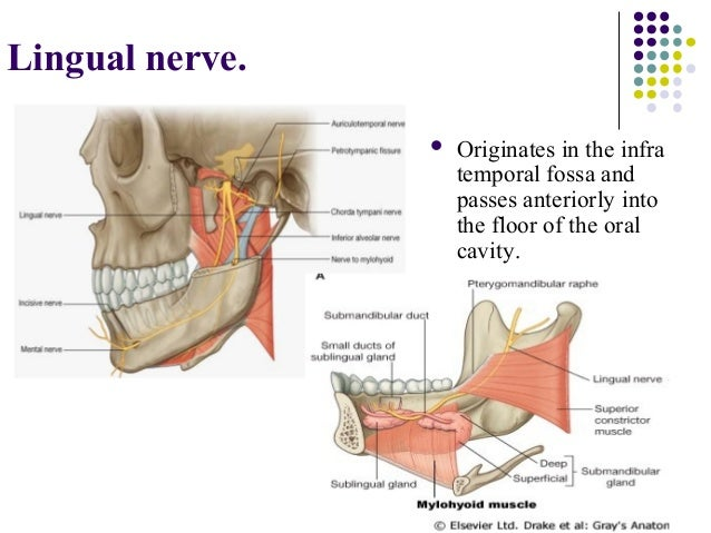 Nerves In Mouth Diagram - Block And Schematic Diagrams •