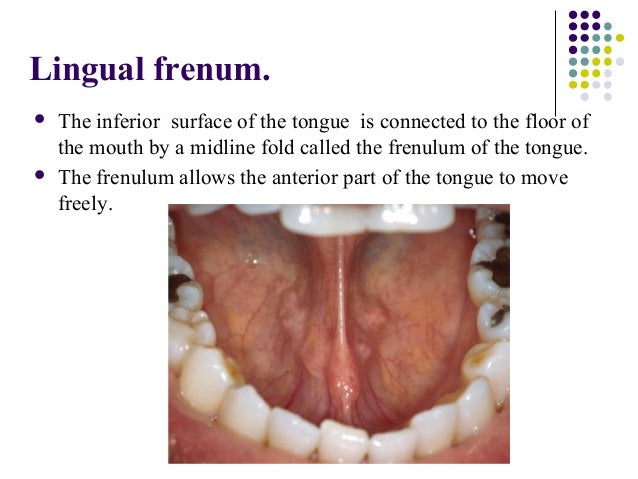 Membrane Securing The Tongue To The Floor Of The Mouth 97