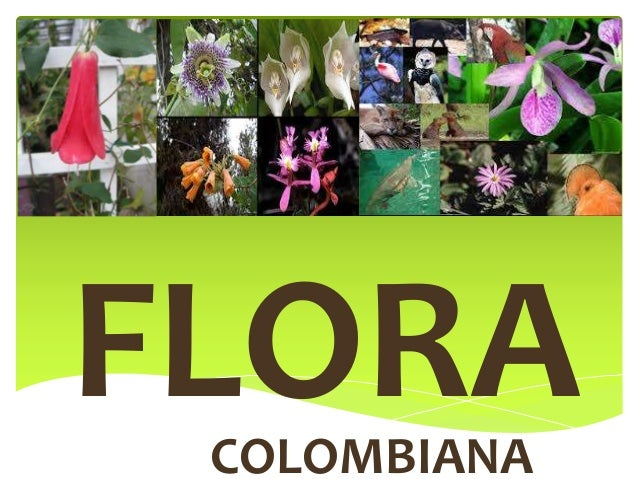 FLORACOLOMBIANA