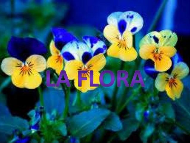: TABLA DE CONTENIDO : 1. INTRODUCCION 2. QUE ES LA FLORA 3. TIPOS DE FLORA 4. TRATADOS DE LA FLORA 5. DATOS CURIOSOS 6. I...